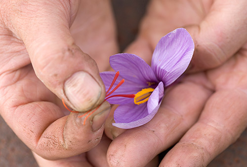 Hands with flower and pistils