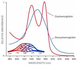 Hemoglobin graph